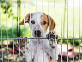 Pes je naším společníkem po celý svůj život. Ani my přece nechceme, aby nás někdo někam odložil!