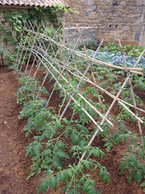 Opora pro více výhonů přinese vyšší úrodu