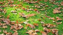 podzimní trávník