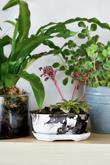 Těžko říct, jestli rostlinám záleží na tom, jaký mají květináč.