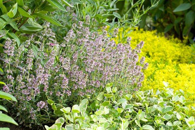 Květen při dorůstajícím měsíci - ideální čas pro založení bylinkové zahrádky