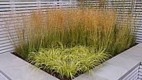 Okrasné trávy se hodí i k moderní vile.