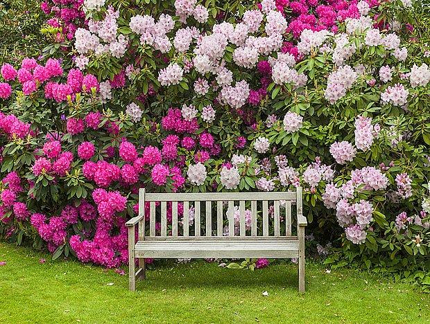 Posezení u vzrostlých rododendronů