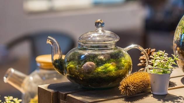 Mechová zahrádka bude prospívat i v konvici na čaj