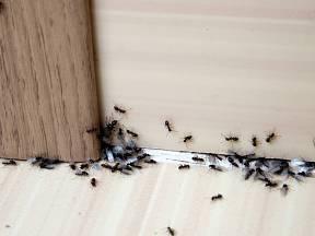 Mravenci spoléhají jeden na druhého.