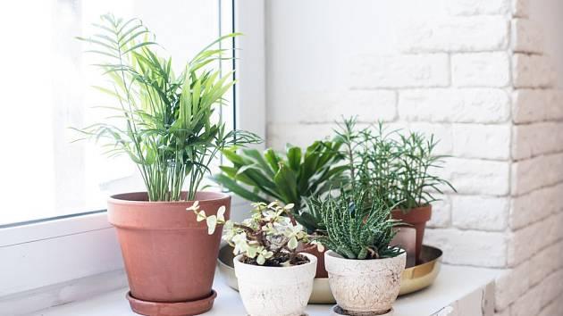 Okno bez záclony a bílá zeď umožní rostlinám získat co nejvíce světla