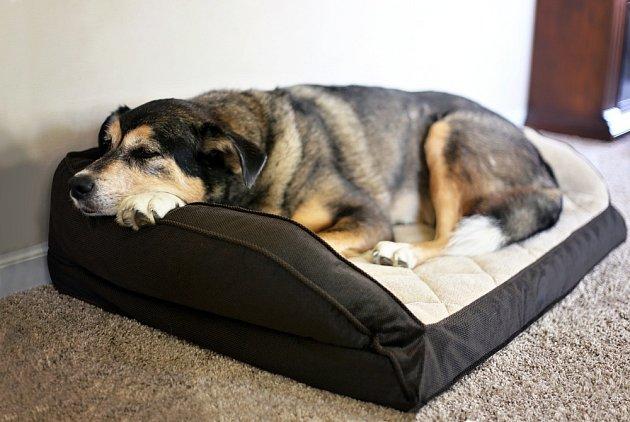 Pes by měl mít své místo pro odpočinek tam, kde nebude nikým a ničím rušen.