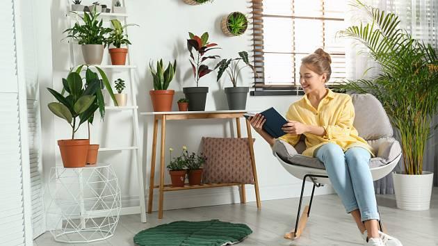 Pokojovky potřebují kvalitní světelné podmínky. Víte, které jsou stínomilné a které ne?