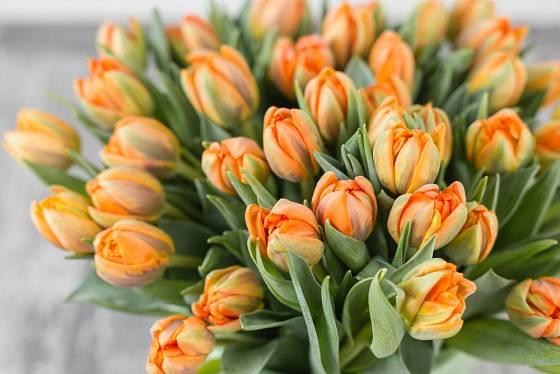 Tulipány vysazujeme na zahradě do hnízd, nejlépe 10 a více cibulí od jednoho druhu.