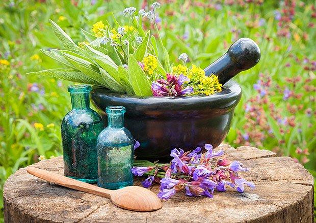 Čerstvé rostliny lze zpracovat mnoha způsoby