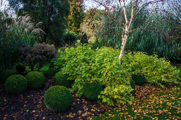 Cornussanguinea 'Midwinter Fire' buxus a Betula ermanii