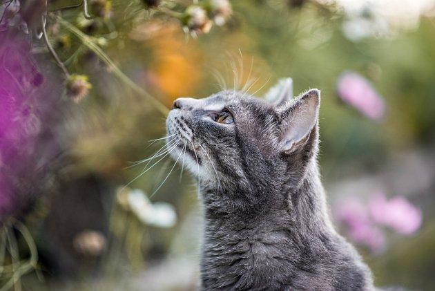 Zvířatům bylinky prospějí...
