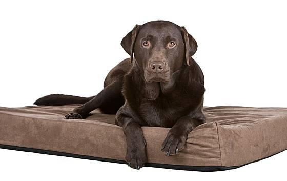 Pohodlné ortopedické matrace slouží nejen jako pelíšek pro psa, ale při cestování usnadní přepravu starých nebo nemocných psů.