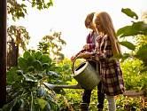 Během léta prostě vyžadují všechny plodiny, co se zavlažování týká, mnohem více pozornosti, než kdy jindy.