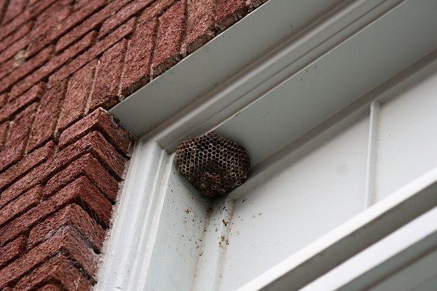 Vosí hnízdo v okně je strašákem každé domácnosti. Na pomoc volejte deratizéra.