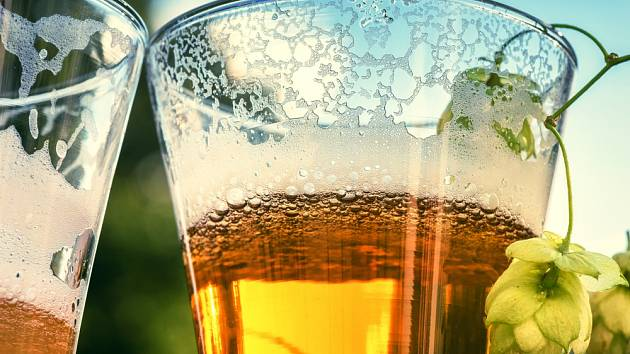 Zvětralé pivo nevyhazujte, raději ho nalijte na růže