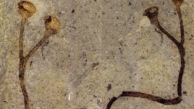 Větévka nejstarší dosud objevené suchozemské rostliny byla uložena v depozitářích Národního muzea.