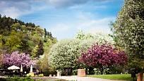 Pestrá paleta barev kvetoucích okrasných dřevin v ornamentální zahradě.