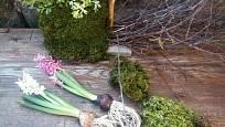 Omyjeme kořínky kvetoucích cibulovin a hyacinty připevníme k aranžmá.