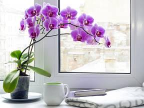 Orchideje na okenním parapetu.