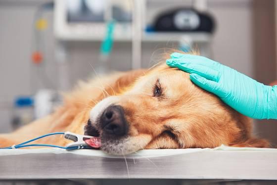 Psi často trpí skrytě, takže ani majitel na nich nemusí hned poznat jejich bolest.
