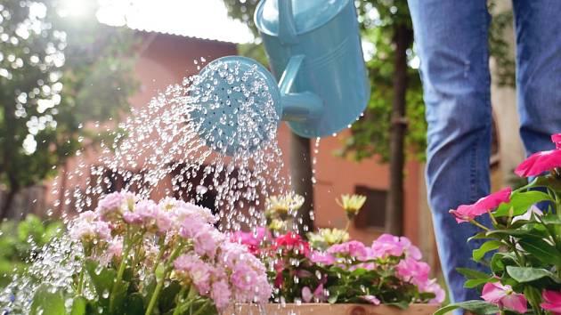 Nejlépe zalévejte každý den brzy ráno nebo večer