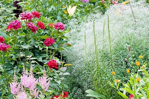 různé kombinace barev v zahradě