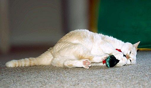 Voňavé hračky pro kočky