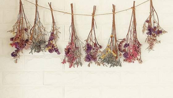 Nejjednodušší způsob sušení květin - zavěšené v menších svazcích.