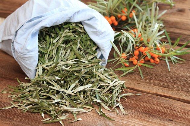 Z listů rakytníku řešetlákového se připravuje zdravý čaj.