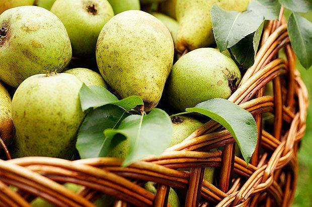 Oblibě se v Česku těší letní a především podzimní odrůdy.