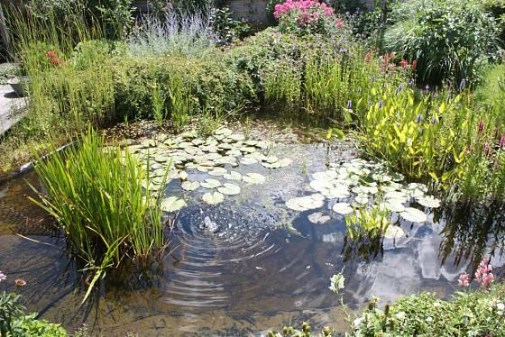 Jezírko je jedním z nejpřitažlivějších prvků zahrady
