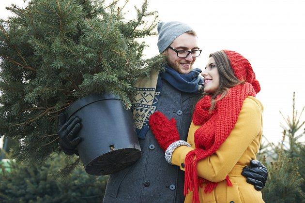 Vánoční stromek v kontejneru kupujeme v dobrém zahradnictví, poctivě zapěstovaný