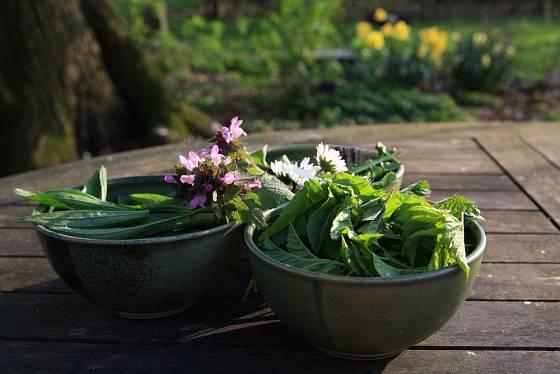 Plané rostliny do salátu jsou nejlepší právě teď, na jaře