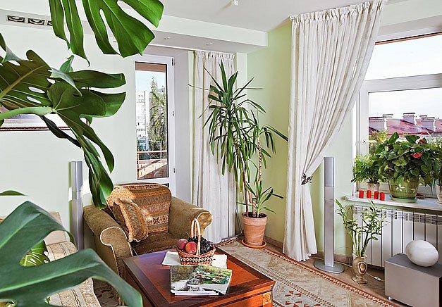 Každé pokojové rostlině je třeba najít vhodné místo
