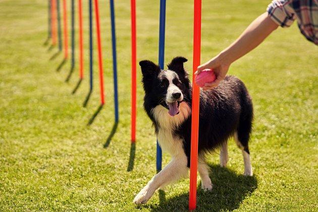 Než psa opustíte a necháte o samotě, je důležité ho vyvenčit a utahat.