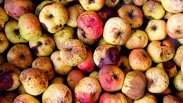 jablka na kompost