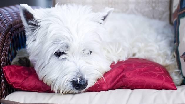 6b72507036b Prokletí zvané psí chlup  jak ovlivnit línání domácích mazlíčků