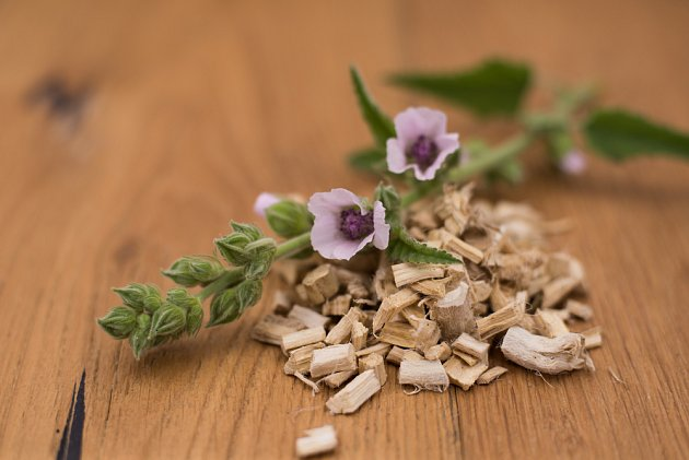 proskurník lékařský (Althaea officinalis)