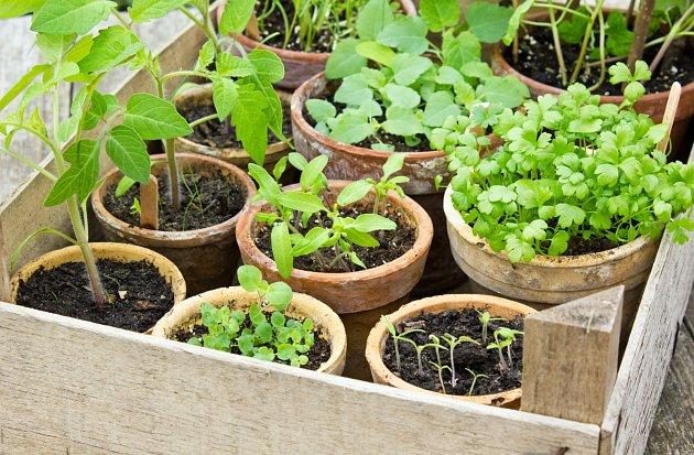 Rostliny z domácího výsevu