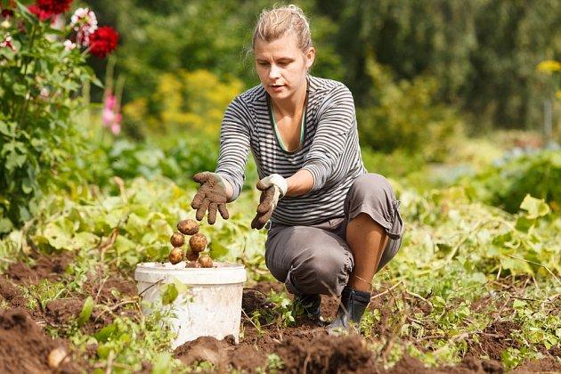 Zahradnické práce vám pomohou spálit spoustu kalorií.