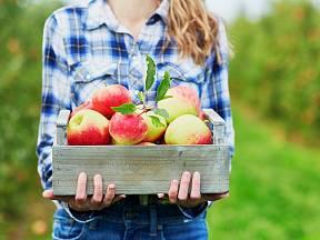 Zpracujte letošní úrodu jablek netradičním způsobem.