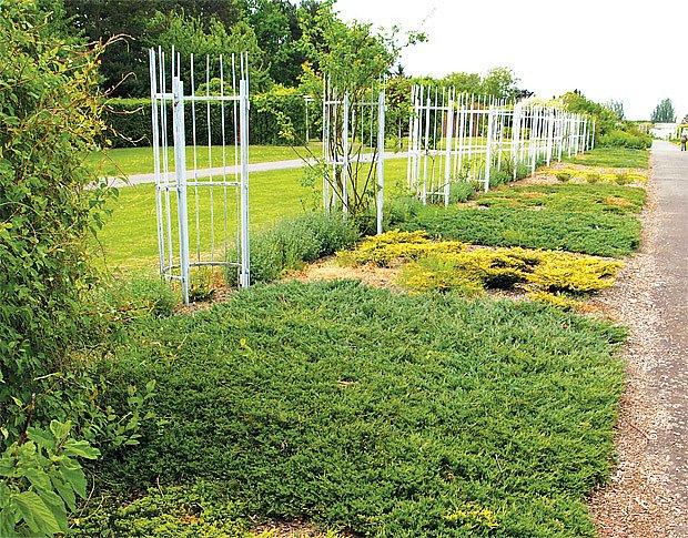 Půdopokryvné dřeviny a květiny v Dendrologické zahradě v Průhonicích