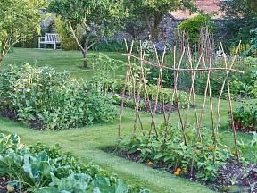 Zeleninová zahrada může být nejen užitečná, ale i pohledná
