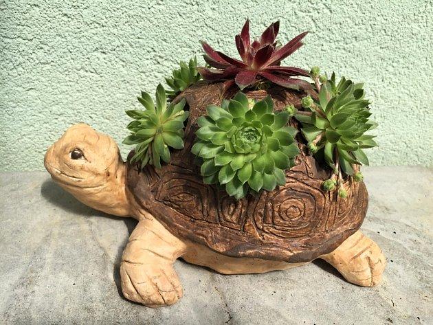 Keramická želva osázená netřesky.