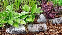 Kůrový mulč ochrání ochrání před vysycháním stínomilné rostliny, jako jsou bohyšky
