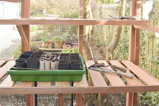 Sazeničky můžete předpěstovávat i ve skelníku