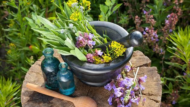 Kdo chce sbírat a používat byliny, měl by je velmi dobře znát.