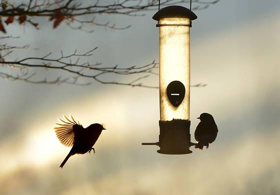 samonásypné krmítko pro ptáky