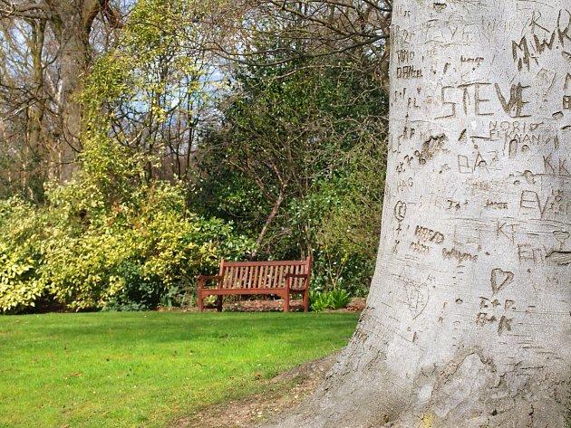 Stromy už poraněná místa nikdy zcela nezregenerují.